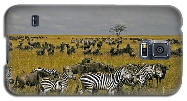 Zebras And Wildebeast   #0861 Galaxy S5 Case
