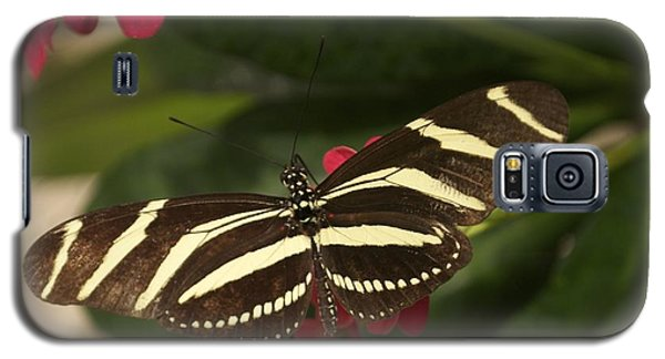 Zebras Can Fly Galaxy S5 Case by Sandy Molinaro