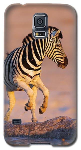 Zebras Jump From Waterhole Galaxy S5 Case by Johan Swanepoel