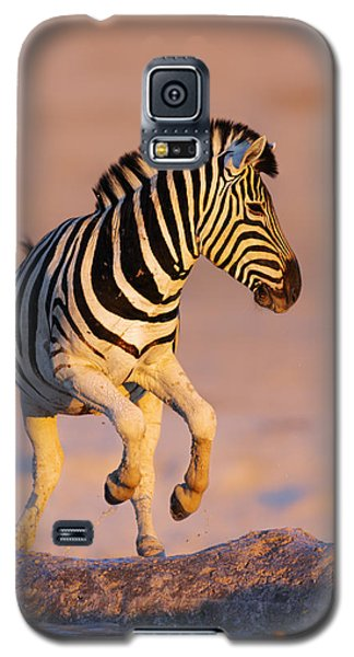 Zebras Jump From Waterhole Galaxy S5 Case