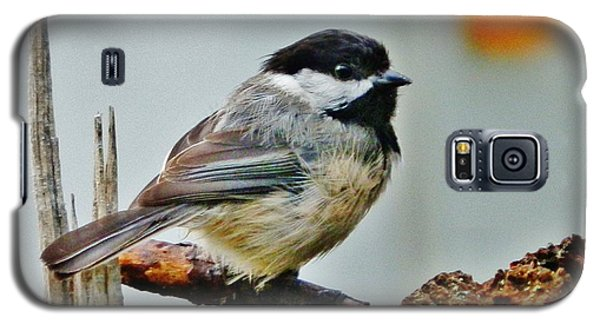 Galaxy S5 Case featuring the photograph Zen Chickadee by VLee Watson