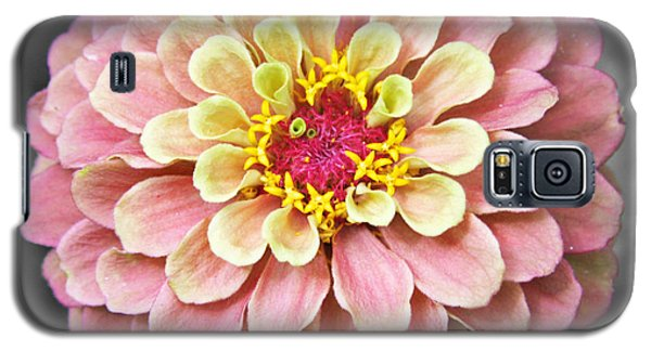 Galaxy S5 Case featuring the photograph Zinnia In Pink And Yellow by Brooke T Ryan