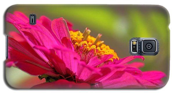 Galaxy S5 Case featuring the photograph Zinnia Show by Erica Hanel