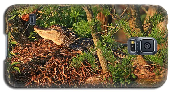 Galaxy S5 Case featuring the photograph  Alligator On Nest by Luana K Perez