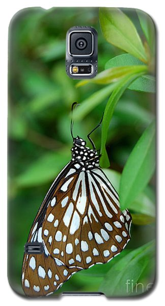 Galaxy S5 Case featuring the photograph  Blue Tiger Butterfly by Eva Kaufman