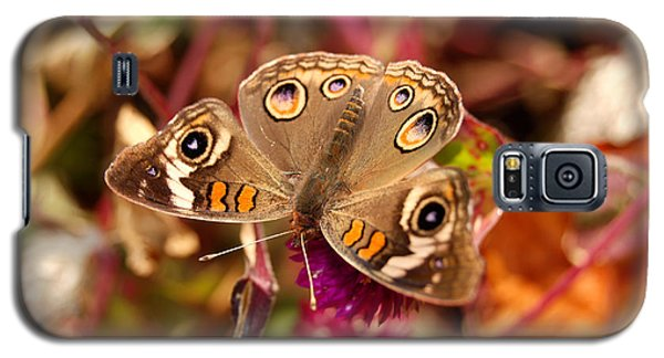 Galaxy S5 Case featuring the photograph  Buckeye Butterfly  by Eva Kaufman