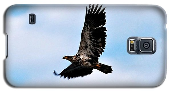 Galaxy S5 Case featuring the photograph  Juvenile Bald Eagle by Peggy Franz