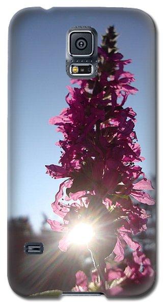 Peeking Sun Galaxy S5 Case