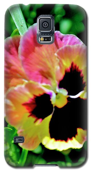 Pink And Yellow Pansy Galaxy S5 Case