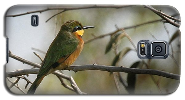 African Bee Eater Galaxy S5 Case