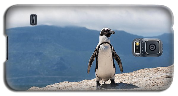 African Penguin Galaxy S5 Case
