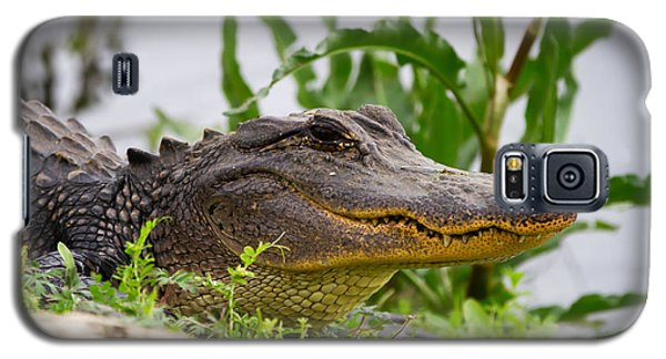 Alligator Galaxy S5 Case