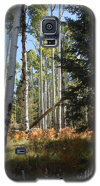 Galaxy S5 Case featuring the photograph Autumn Shadows by Fred Wilson