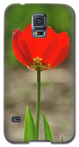 Galaxy S5 Case featuring the photograph Beauty In Red by Dariusz Gudowicz