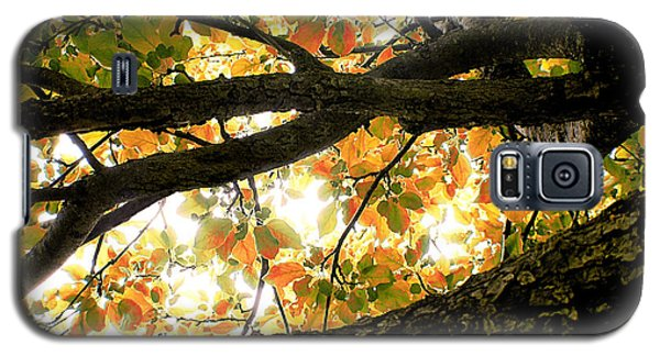 Beneath The Autumn Wolf River Apple Tree Galaxy S5 Case by Angie Rea