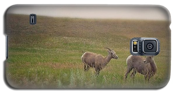 Cause Galaxy S5 Case - Bighorn Sheep by Cody Proctor