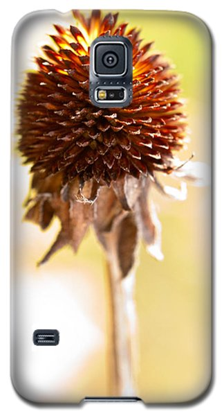 Black-eyed Susan After The Winter Galaxy S5 Case by  Onyonet  Photo Studios
