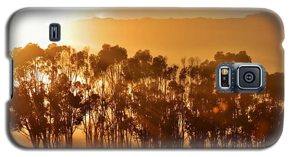 Galaxy S5 Case featuring the photograph Blue Gum Trees by Werner Lehmann
