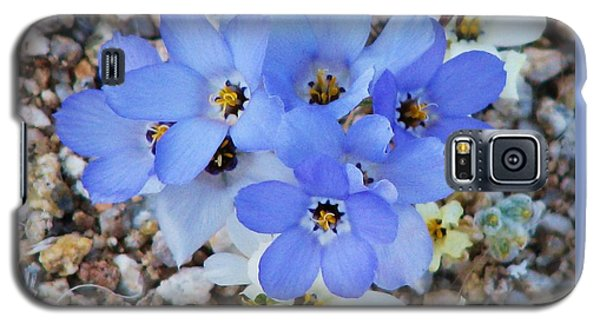Rare Blue Parry Gilia Galaxy S5 Case