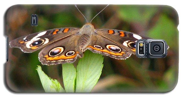 Buckeye Butterfly Galaxy S5 Case