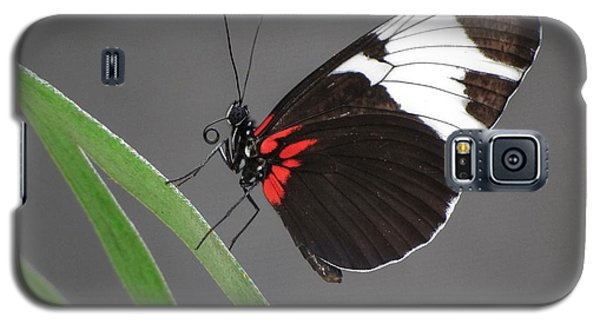 Galaxy S5 Case featuring the photograph Butterfly  by Tam Ryan