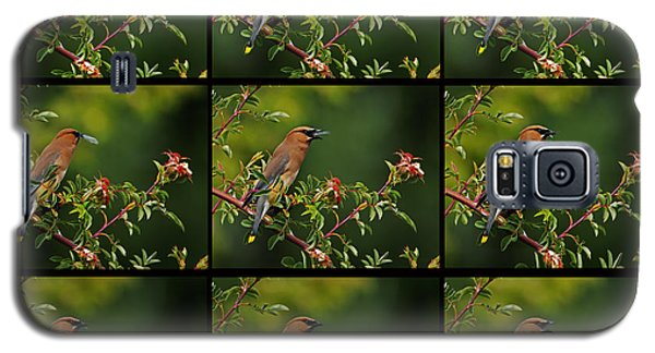 Cedar Wax Wing Having Lunch Galaxy S5 Case
