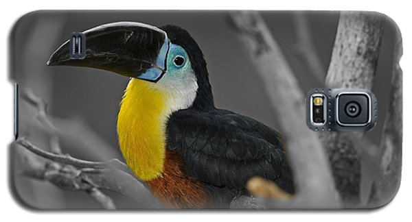 Chestnut Mandibled Toucan  Galaxy S5 Case