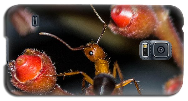 Curious Ant Galaxy S5 Case