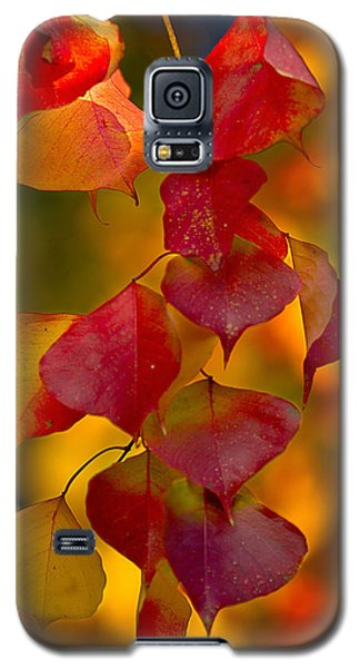 Galaxy S5 Case featuring the photograph Fall Color 1 by Dan Wells