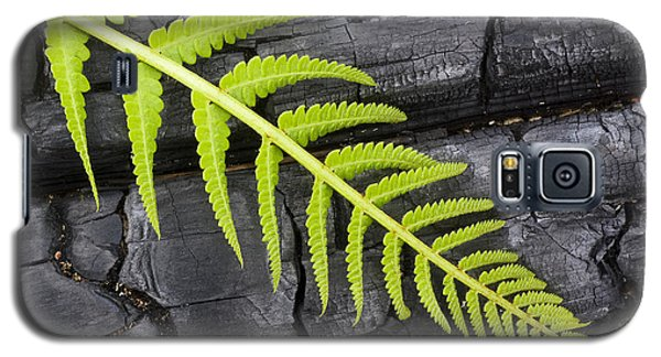 Fern On Burnt Log Galaxy S5 Case