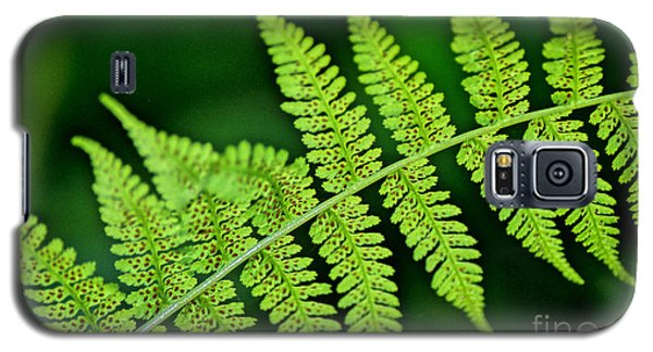 Galaxy S5 Case featuring the photograph Fern Seed by Sharon Elliott