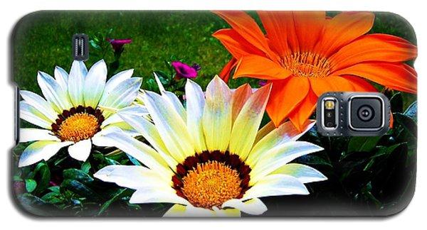 Garden Daisies Galaxy S5 Case