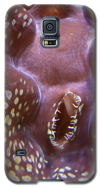 Giant Clam In Pink With Yellow Spots Galaxy S5 Case