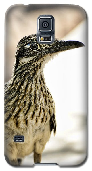 Greater Roadrunner  Galaxy S5 Case by Saija  Lehtonen
