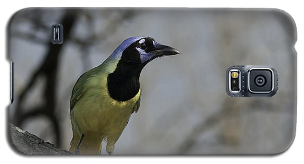 Galaxy S5 Case featuring the photograph Green Jay by Betty Depee