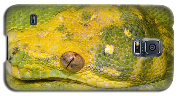 Green Tree Python Galaxy S5 Case by Dante Fenolio