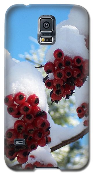 Galaxy S5 Case featuring the photograph Hawthorn Berries In The Snow by Peter Mooyman