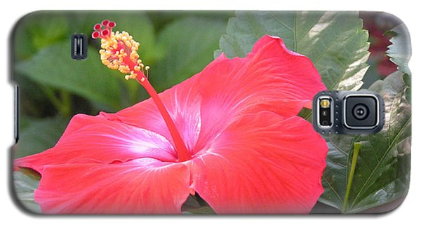Hibiscus Flower Galaxy S5 Case