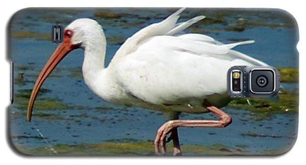 Ibis 2 Galaxy S5 Case by Joe Faherty