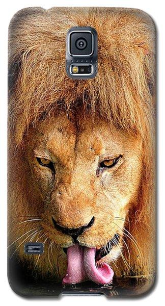 Lion Drinking Galaxy S5 Case