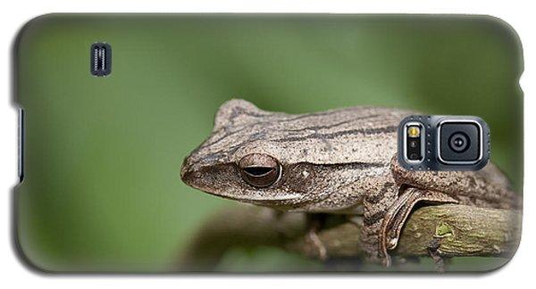 Malaysia Frog Galaxy S5 Case