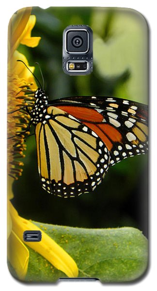 Monarch And The Sunflower Galaxy S5 Case