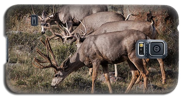 Mule Deer Bucks Galaxy S5 Case
