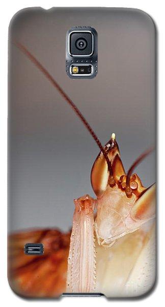 Orchid Praying Mantis Galaxy S5 Case by Joerg Lingnau