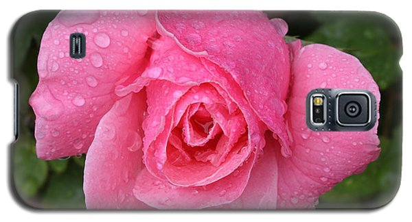 Pink Rose Macro Shot With Rain Drops Galaxy S5 Case