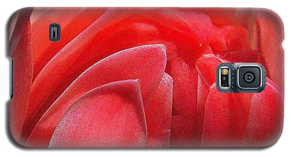 Pink Torch Ginger Galaxy S5 Case