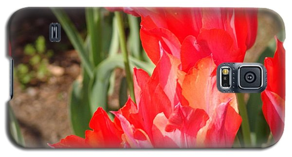 Praying Tulips Galaxy S5 Case by Rod Ismay