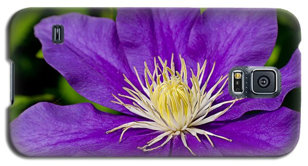Purple Clematis Flower Galaxy S5 Case