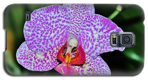 Galaxy S5 Case featuring the photograph Purple Orchid by Sherman Perry
