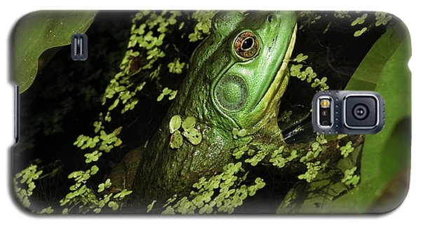 Rana Clamitans Or Green Frog Galaxy S5 Case by Perla Copernik